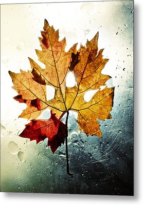 Autumn Leaf Metal Print by Ivan Vukelic