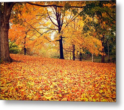 Autumn Leaves - Central Park - New York City Metal Print by Vivienne Gucwa