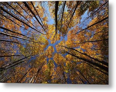 Autumn Sky Metal Print by Mircea Costina Photography