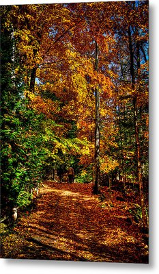 Autumn Walk Metal Print by David Patterson