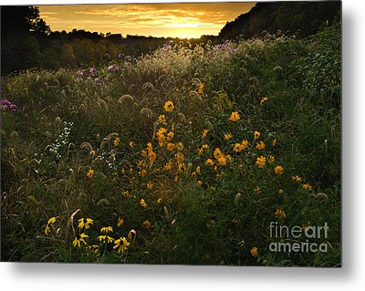 Autumn Wildflower Sunset - D007757 Metal Print by Daniel Dempster