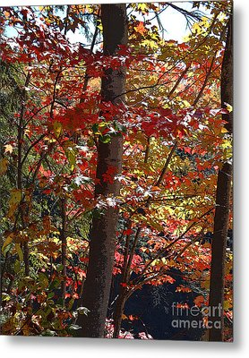 Autumn's Delight Metal Print by Diane E Berry