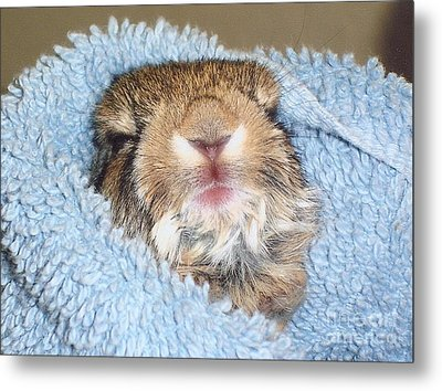 Baby Bunny Rabbit Metal Print by Marilyn Magee