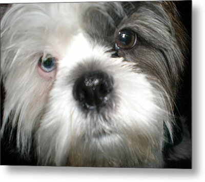 Baby Face Dog Metal Print by Sherry Hunter