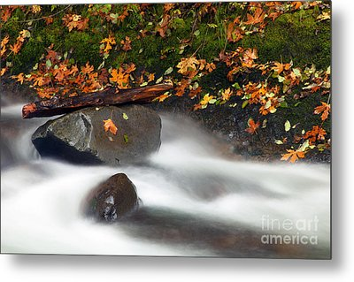 Balance Of The Seasons Metal Print by Mike  Dawson