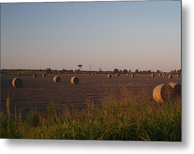Bales In Peanut Field 1 Metal Print by Douglas Barnett