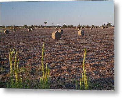Bales In Peanut Field 12 Metal Print by Douglas Barnett