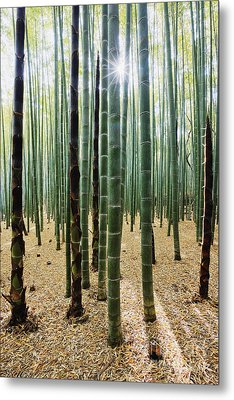 Bamboo Forest Metal Print by Jeremy Woodhouse