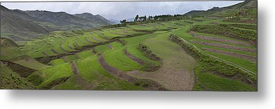 Barley Crop Grown On Terraced Hillsides Metal Print by Phil Borges