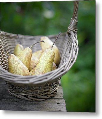Basket Of Freshly Picked Pears. Metal Print by Dougal Waters