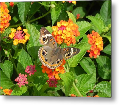 Beautiful Butterfly Metal Print by Sandy Owens