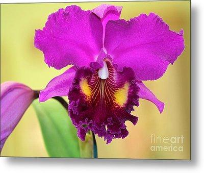 Beautiful Hot Pink Orchid Metal Print by Sabrina L Ryan
