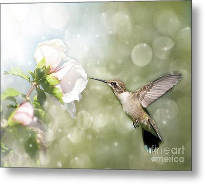 Beauty In Flight Metal Print by Sari ONeal