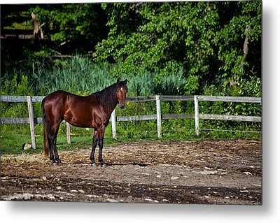 Beauty Of A Horse Metal Print by Karol Livote
