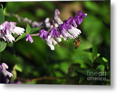 Bee On Flower Metal Print by Kaye Menner