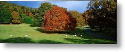 Beech Tree, Glendalough, Co Wicklow Metal Print by The Irish Image Collection