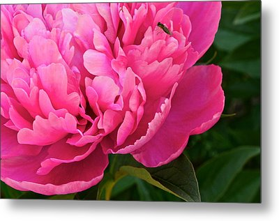 Behold The Beauty Metal Print by Frozen in Time Fine Art Photography