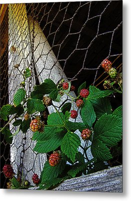 Berries Metal Print by Jessica Brawley