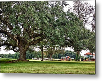 Big Oak And The Tractors Metal Print by Michael Thomas