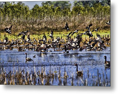 Billabong V10 Metal Print by Douglas Barnard
