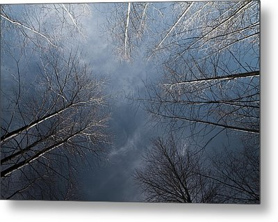 Birch Metal Print by James Ingham