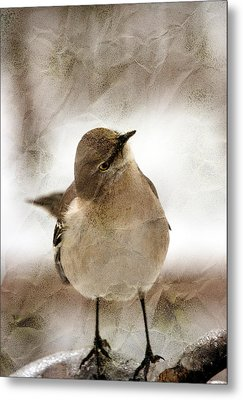 Bird In A Bag Metal Print by Skip Willits