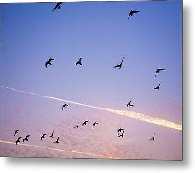 Birds Flying At Sunset Metal Print by Sarah Palmer