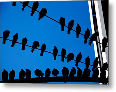 Birds On A Wire Metal Print by Karol Livote