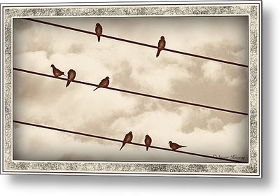 Birds On Wires Metal Print by Susan Kinney
