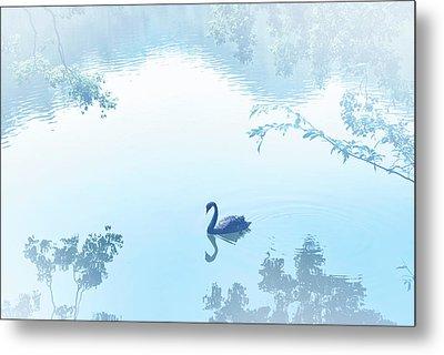 Black Swan Floating On Mist Lake Metal Print by Lawren