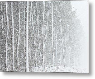Blizzard Blankets Trees In Snow Metal Print by Douglas MacDonald