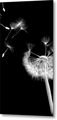 Blown Away Metal Print by Rhonda Barrett