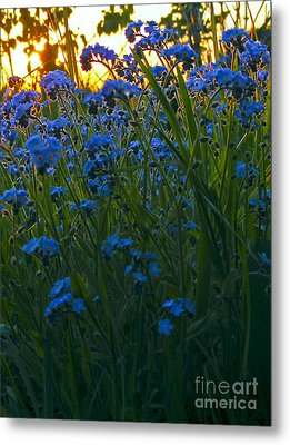 Blue And Gold Metal Print by Trevor Fellows