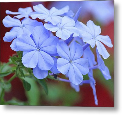Blue Beauty Metal Print by Becky Lodes