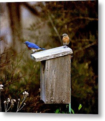 Blue Birds Metal Print by Todd Hostetter