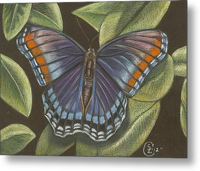 Blue Butterfly  Metal Print by Stephanie L Carr