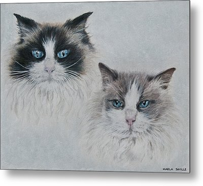 Blue Eyed Cats Metal Print by Marla Saville