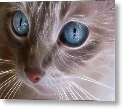 Blue Eyes Metal Print by Tilly Williams