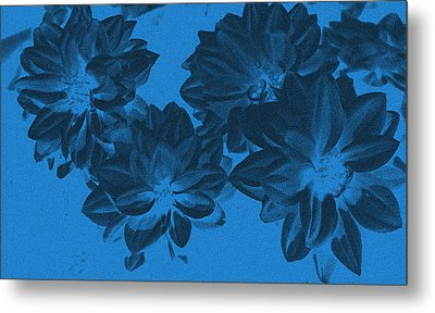 Blue Flower Art Metal Print by Aimee L Maher Photography and Art Visit ALMGallerydotcom