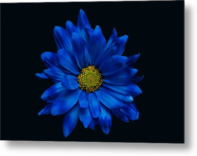 Blue Flower Metal Print by Ron Smith