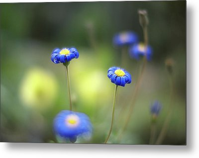 Blue Flowers Metal Print by Myu-myu