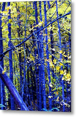 Blue Forest Metal Print by Todd Sherlock