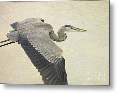 Blue Heron On Canvas Metal Print by Deborah Benoit