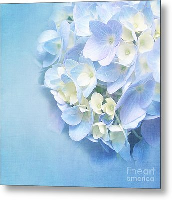 Blue Hydrangea Metal Print by VIAINA Visual Artist