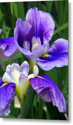 Blue Irises Metal Print by Deborah  Crew-Johnson