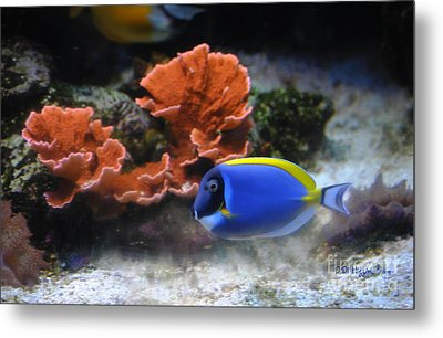 Blue Tang And Coral Metal Print by DiDi Higginbotham