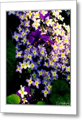 Bluets And Violets Metal Print by Diana  Tyson