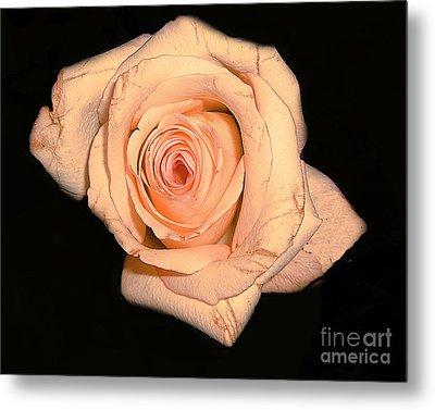 Blush Rose 2 Metal Print by Merton Allen
