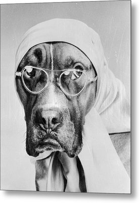 Bohemian Boxer Metal Print by Keystone Features