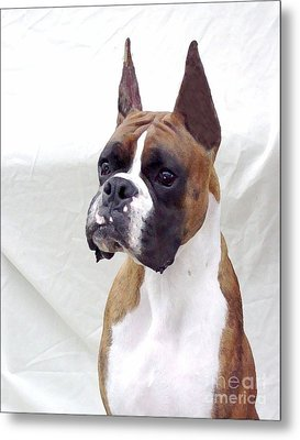 Boxer 140 Metal Print by Larry Matthews